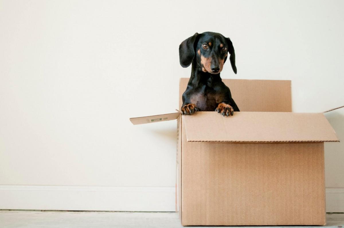 Квартирный переезд с домашними питомцами - это легко!